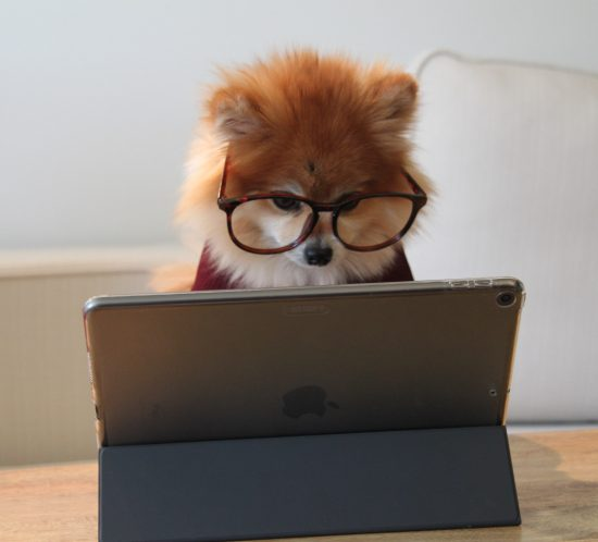 chien devant un ordinateur